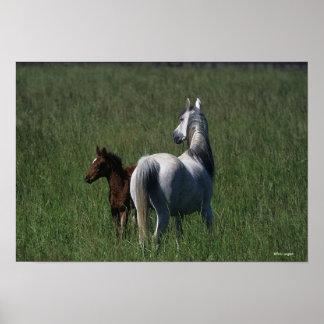 Arab Mare & Foal Poster