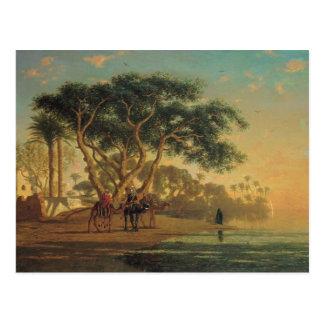 Arab Oasis, 1853 Postcard