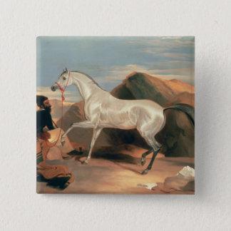 Arab Stallion 15 Cm Square Badge