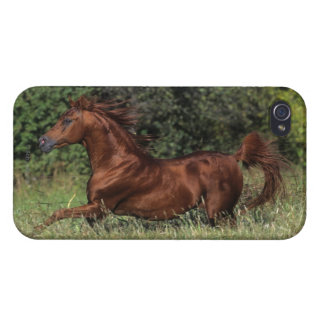 Arab Stallion Running in the Grass iPhone 4/4S Cases