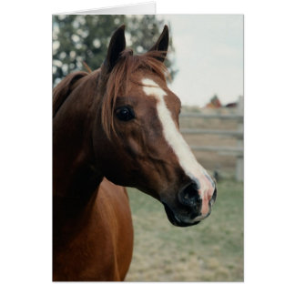 Arabian at Pasture Greeting Card