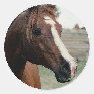 Arabian at Pasture Round Sticker