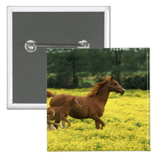 Arabian foal and mare running through 15 cm square badge