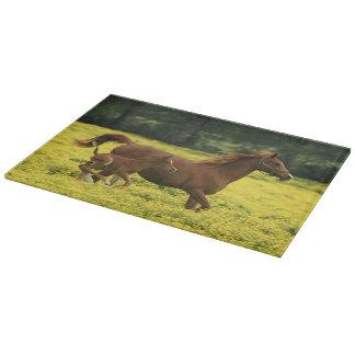 Arabian foal and mare running through cutting board