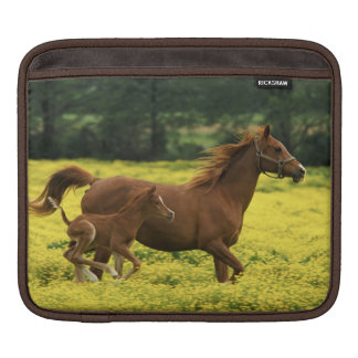 Arabian foal and mare running through iPad sleeve