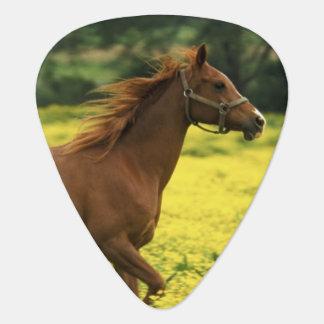 Arabian foal and mare running through plectrum
