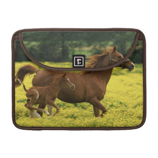 Arabian foal and mare running through sleeve for MacBooks