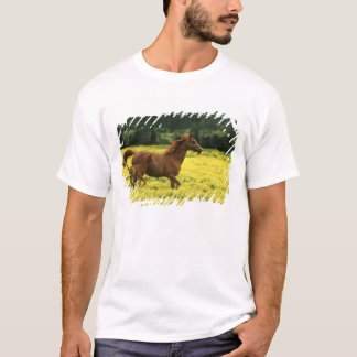 Arabian foal and mare running through T-Shirt
