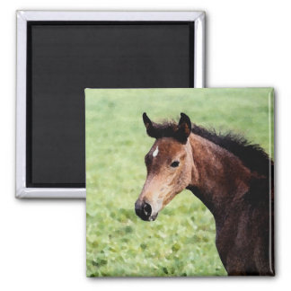 Arabian foal magnet