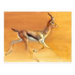 Arabian Gazelle 2010 Postcard