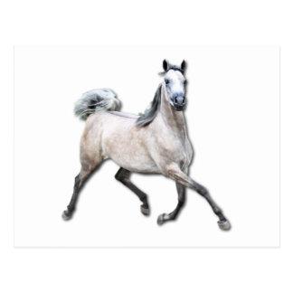 Arabian Horse - Alia Postcard