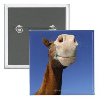 Arabian Horse, Bavaria, Germany 15 Cm Square Badge