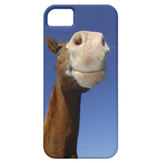 Arabian Horse, Bavaria, Germany iPhone 5 Case