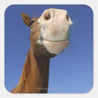 Arabian Horse, Bavaria, Germany Square Sticker