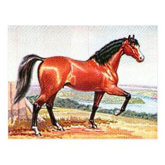 Arabian Horse Brown Bay Vintage Painting Postcard