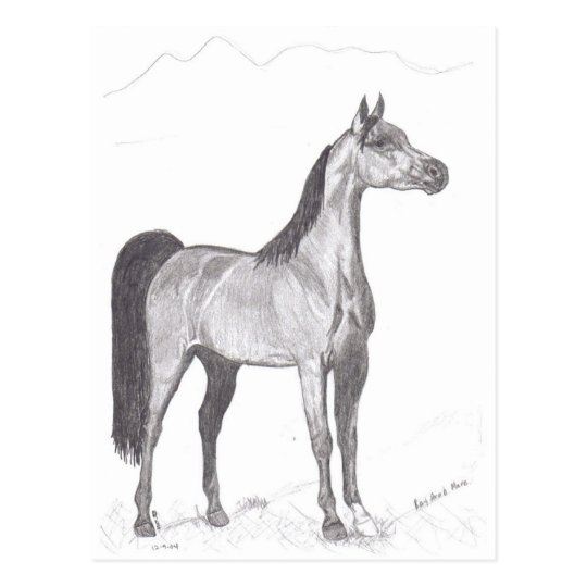 Arabian Horse in Pencil Postcard
