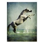 Arabian Horse in Water