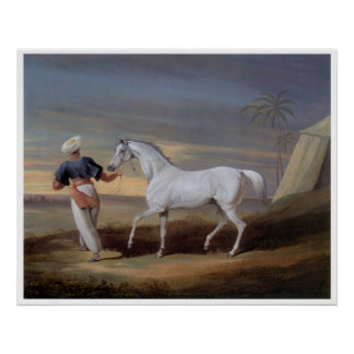 Arabian Horse Vintage Art Print Poster