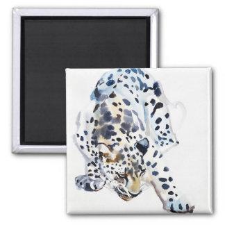 Arabian Leopard 2008  5 Square Magnet