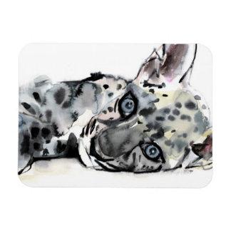 Arabian Leopard Cub 2008 Rectangular Photo Magnet