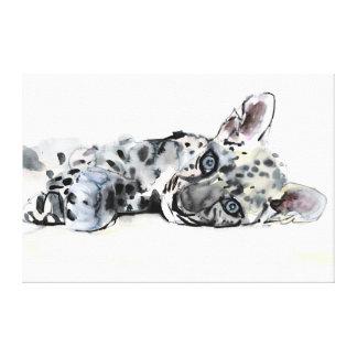 Arabian Leopard Cub 2008 Stretched Canvas Print