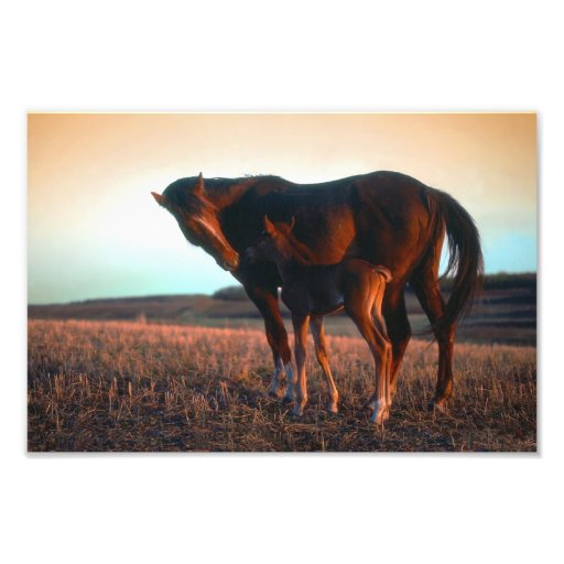 Arabian mare and colt photo art