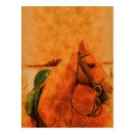 Arabian mare profile postcards