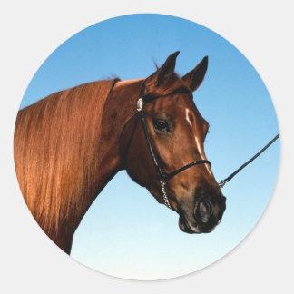 Arabian Show Horse Round Sticker