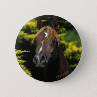 Arabian Stallion 6 Cm Round Badge