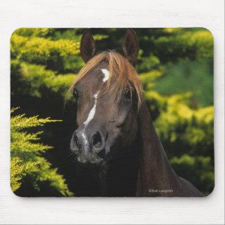 Arabian Stallion Mouse Mat