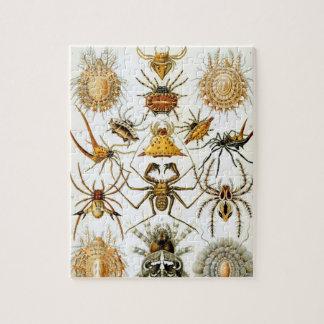 Arachnids by Ernst Haeckel, Vintage Spiders Jigsaw Puzzle
