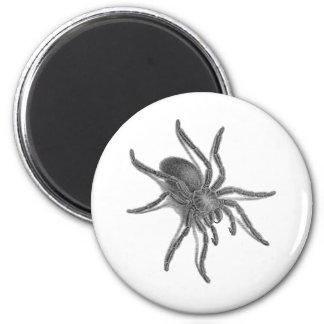 Aranea Avicularia, Black Cuban Spider 6 Cm Round Magnet
