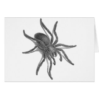 Aranea Avicularia, Black Cuban Spider Card