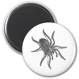 Aranea Avicularia, Black Cuban Spider Magnet