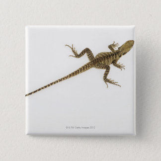 Arboreal agamid species native to Eastern 15 Cm Square Badge