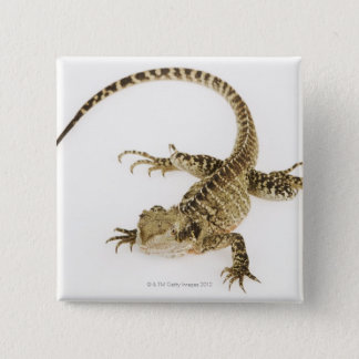 Arboreal agamid species native to Eastern 2 15 Cm Square Badge