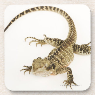 Arboreal agamid species native to Eastern 2 Coasters