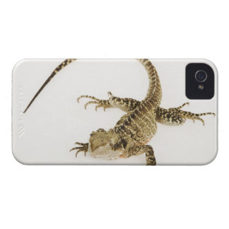 Arboreal agamid species native to Eastern 2 iPhone 4 Case-Mate Cases