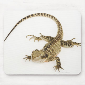Arboreal agamid species native to Eastern 2 Mouse Pad