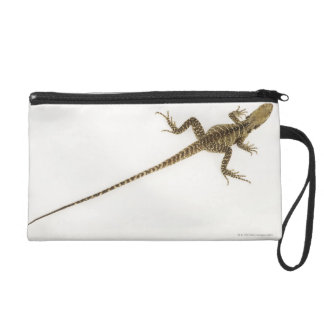 Arboreal agamid species native to Eastern Wristlet Clutches