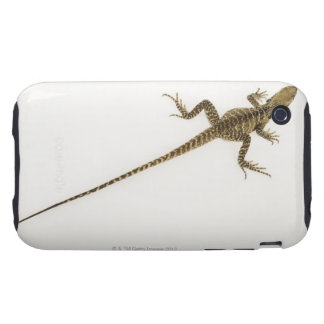 Arboreal agamid species native to Eastern iPhone 3 Tough Cases