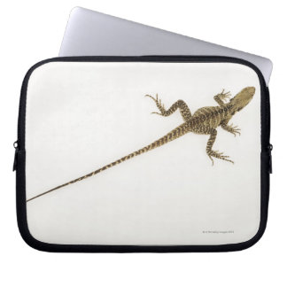 Arboreal agamid species native to Eastern Laptop Sleeve