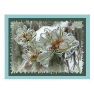 Arborvitae Tips in Ice Postcards
