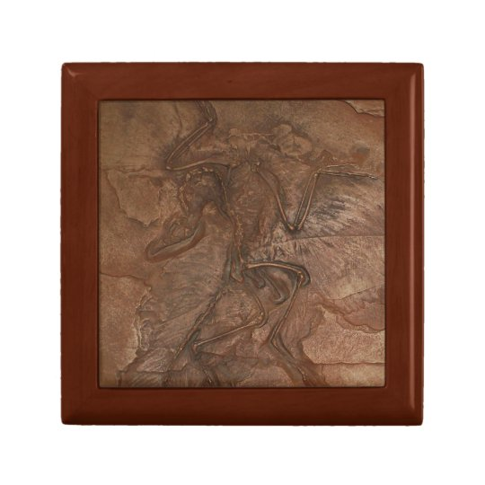 Archaeopteryx fossil - Gift box
