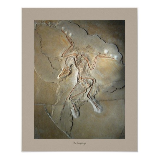 Archaeopteryx Poster