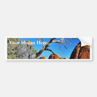 Arches National Park Old Tree Bumper Stickers