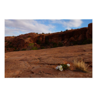 Arches Slickrock and Evening Primrose Poster