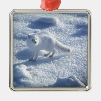 Arctic fox Alopex lagopus) An arctic fox, in 2 Silver-Colored Square Decoration