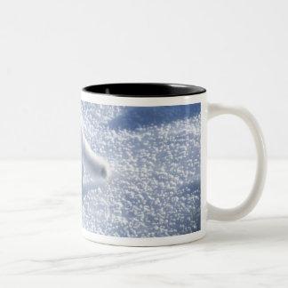 Arctic fox Alopex lagopus) An arctic fox, in 2 Two-Tone Coffee Mug