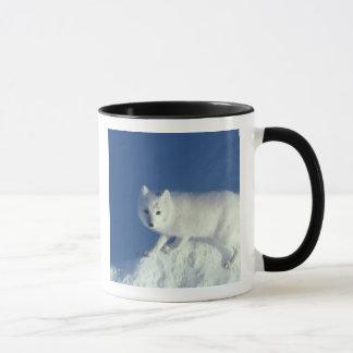 Arctic fox Alopex lagopus) An arctic fox, in Mug